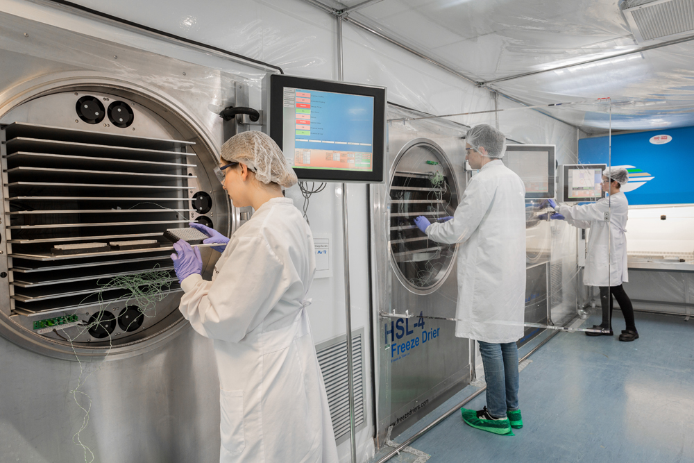 Scientists putting assays into long freeze dryers